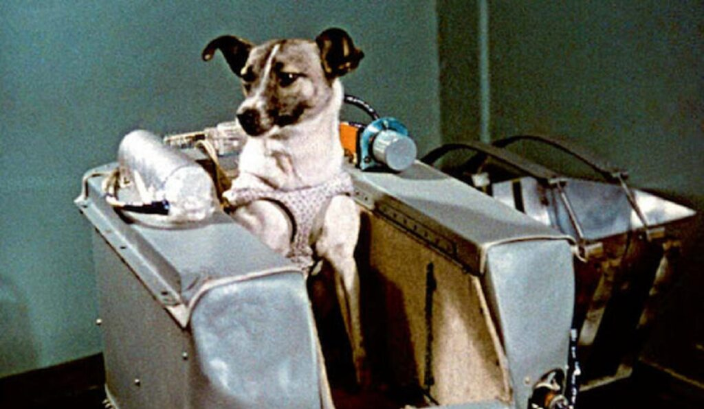 uzay yolculugu yapan 10 hayvan moblobi