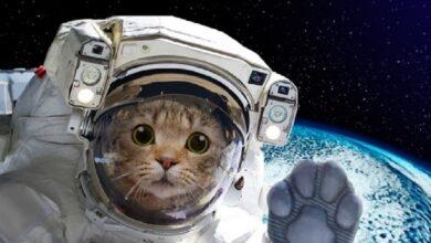 Photo of Uzay Yolculuğu Yapan 10 Hayvan ve İlginç Hikayeleri!