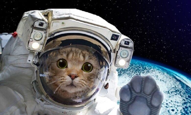 uzay yolculugu yapan 10 hayvan ve ilginc hikayeleri
